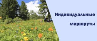 Цветочная поляна и лес